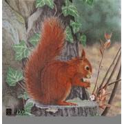 Jvd wiewiórka
